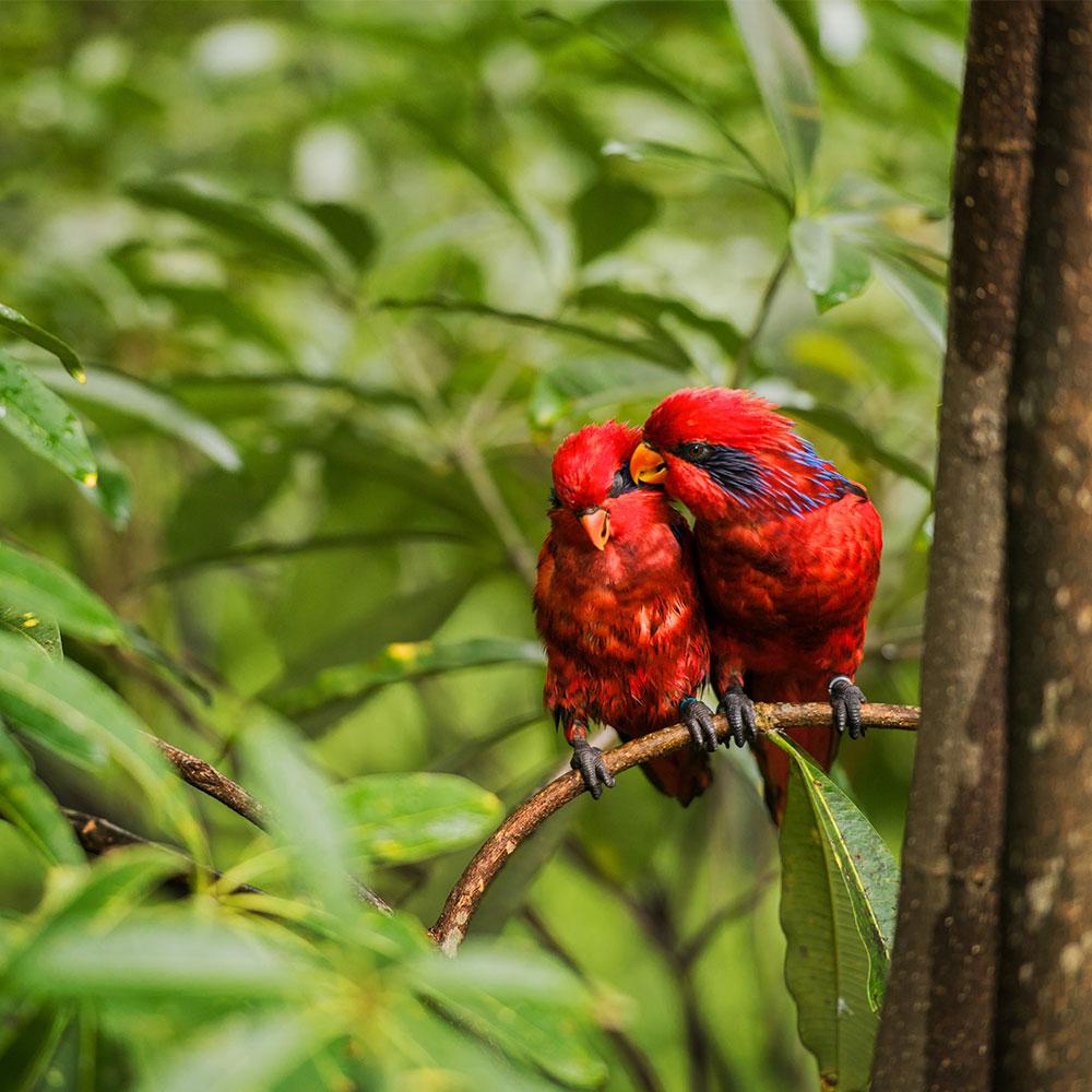 nature wildlife visit singapore official site