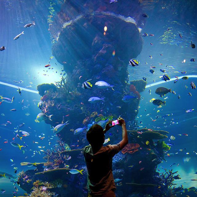 Visit s e a aquarium featuring 800 species visit for Site aquarium