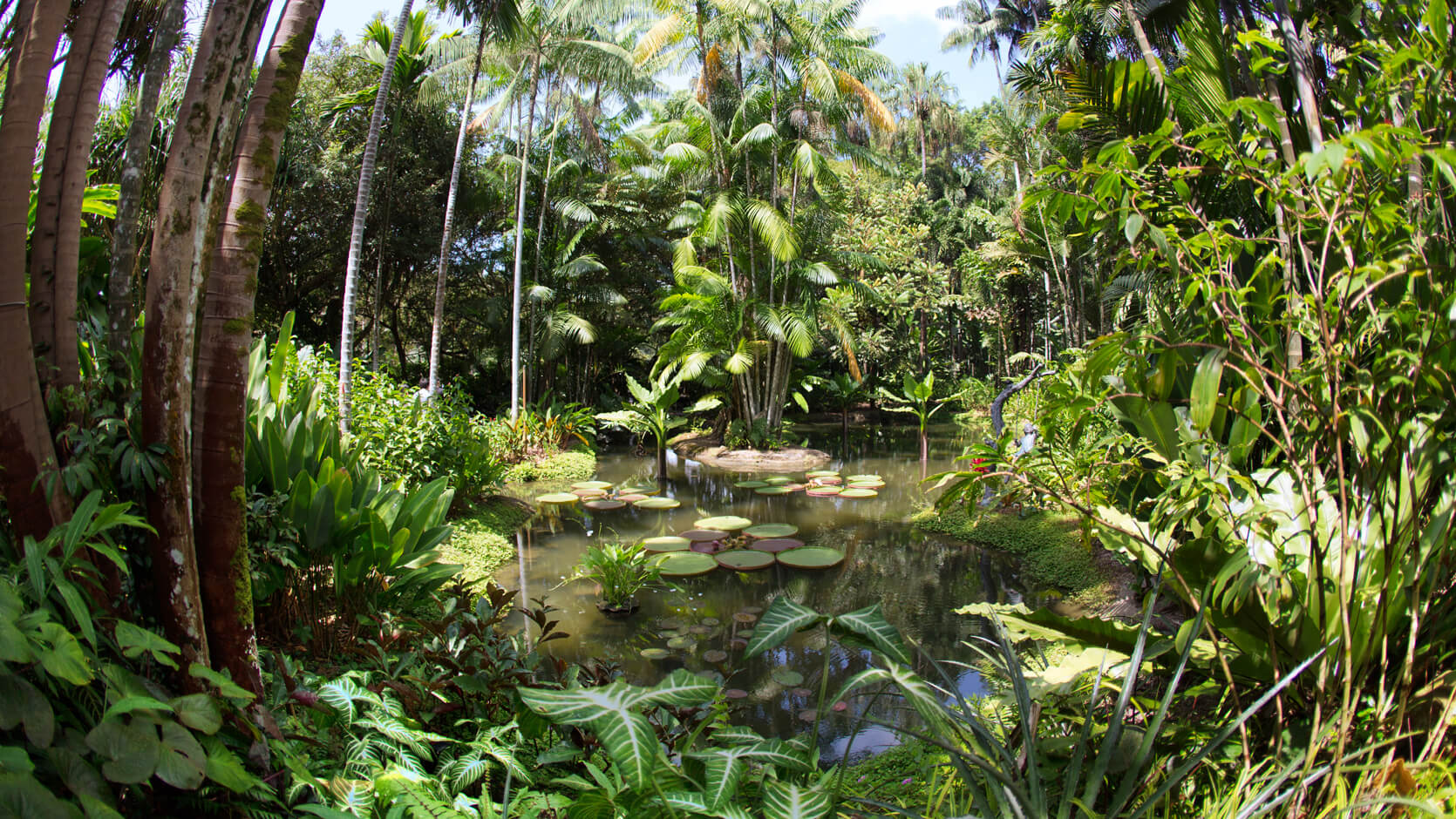 7 reasons to visit singapore botanic gardens visit singapore for Garden pool haiti