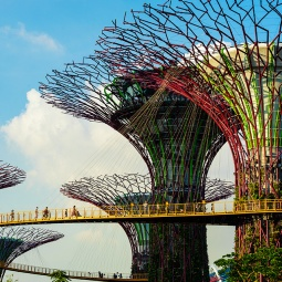 A ground up view of the OCBC Skywalk at SuperTree Grove at Gardens By The Bay Singapore