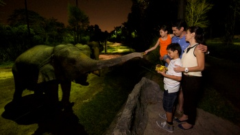A family interacting with a baby elephant at Night Safari