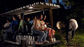 Du khách đi xe điện nhìn thấy heo vòi Malayan ở Night Safari Singapore