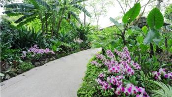 Đường đi bộ ở Vườn bách thảo Singapore