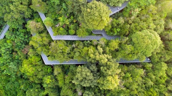 Beautiful drone shot of the southern ridges forest walk
