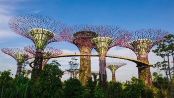 SuperTrees at the Gardens by the Bay.