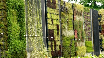 A wall with different greenery at HortPark.