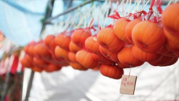Mandarin oranges sold during Chinese New Year