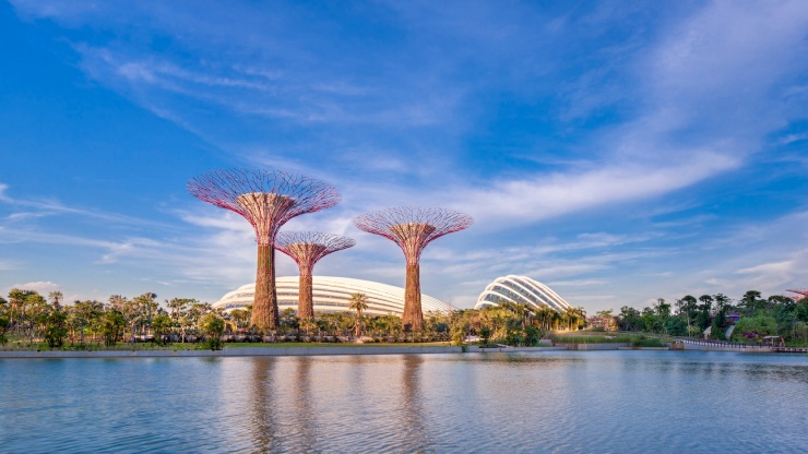 Wide shot of Supertree Grove with Flower Dome in background