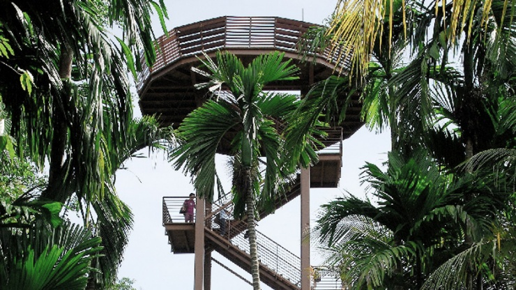 Bird lovers can spot rare species from a 21-metre tall viewing tower at Chek Jawa.