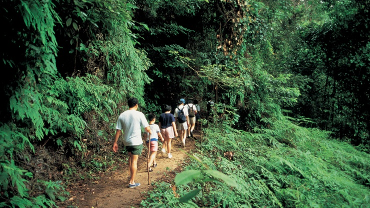 Family trekking at Bukit Timah Nature Reserve
