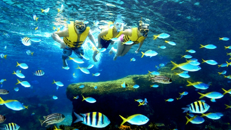Visitors snorkelling at Rainbow Reef at Adventure Cove Waterpark™