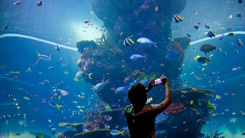 A tourist taking a picture in the large aquarium tank at the S.E.A. Aquarium