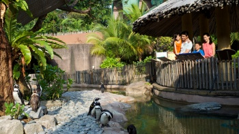 Family looking at penguins at Jurong Bird Park