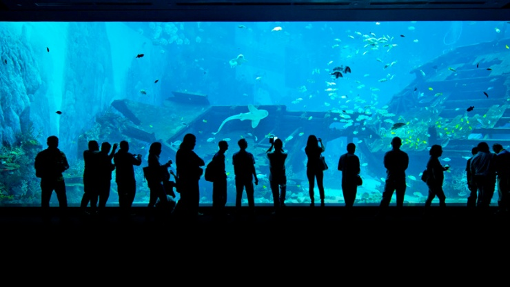 Admire the panoramic marine masterpiece that is the Open Ocean's viewing panel at the SEA Aquarium in Singapore.