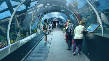 Catch a glimpse of more than 50,000 creatures that live underwater at the SEA Aquarium.