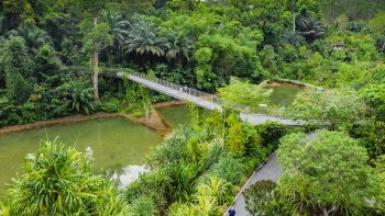 Learning Forest at Singapore Botanic Gardens