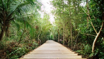 A walking trail in Kranji Marshes.