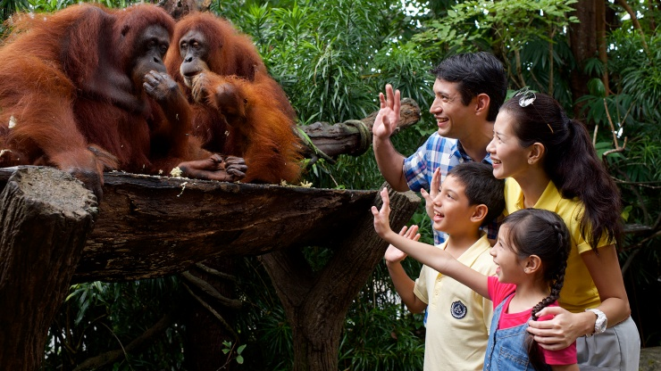 Family waving at Orangutans.