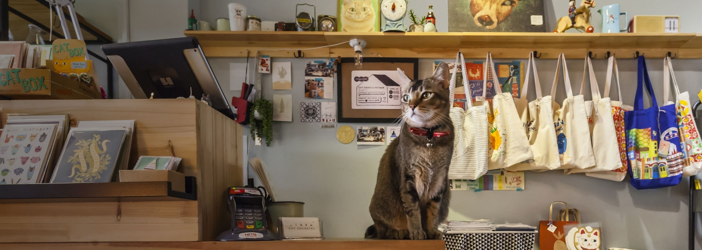 A cat on the cashier counter of a shop