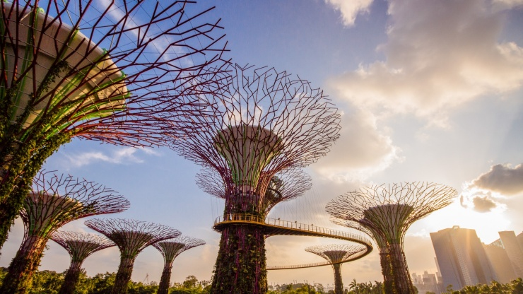 Majestic and beautiful supertrees at Gardens by the Bay, Singapore