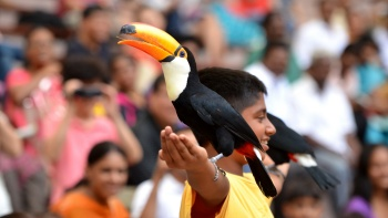 Meet a variety of beautiful species during daily feeding sessions at the Jurong Bird Park.