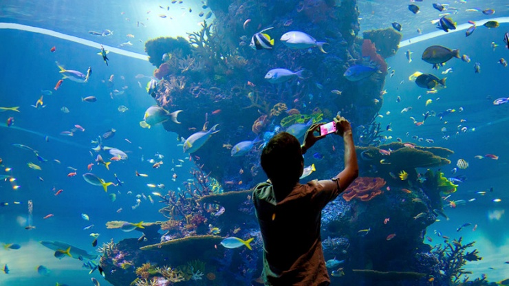 Man Taking Picture Of Marine Life At S E A Aquarium