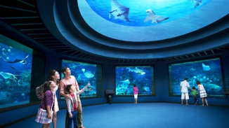 Families looking at marine life at S.E.A. Aquarium™