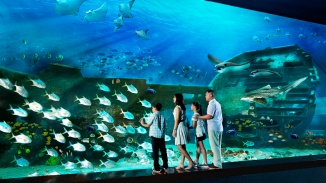 Family looking at marine life at S.E.A. Aquarium™