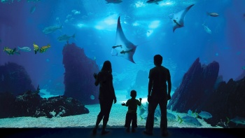 The Open Ocean habitat's viewing panel at the SEA Aquarium – also the world's largest – is 36 metres wide and 8.3 metres high.