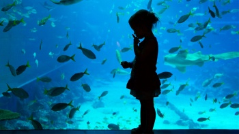 From dangerous sharks to endangered species, the SEA Aquarium in Singapore offers everyone excitement like no other.