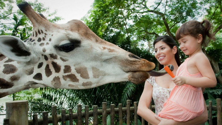 Tourists, mother and daughter feeding a giraffe at the Singapore Zoo.