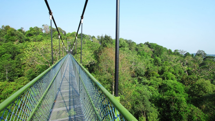 Brave the tree tops at Macritchie Nature Trail & Reservoir Park