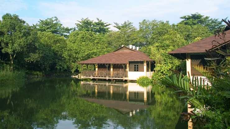 Explore a world rich with animal and plant life at the Sungei Buloh Wetland Reserve.