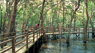 Wide shot of boardwalk at Sungei Buloh Wetland Reserve
