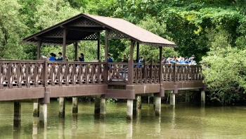 Catch migratory birds escaping the cold on their way to the warmer climes of Australia at Sungei Buloh Wetland Reserve.