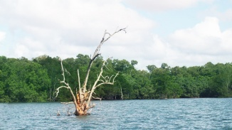 Wideshot of a tree in the waters of Pulau Ubin. Photo by Walter Lim via Foter.com