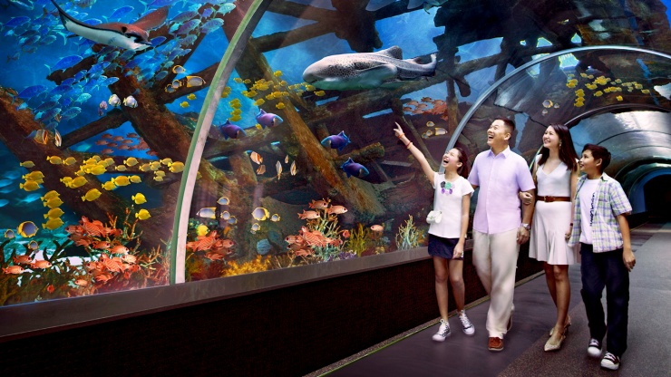 A family of tourists viewing the marine flora and fauna at S.E.A Aquarium at Resorts World™ Sentosa
