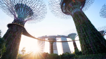 View of the Supertrees at Gardens by the Bay